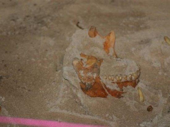 Ученые обнаружили на Карибах потомков вымершего племени индейцев