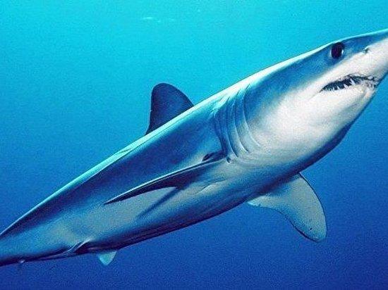 На территории Беларуси нашли новый вид ископаемых акул