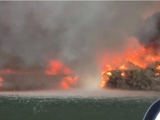 Редкое зрелище: огненный торнадо сняли на видео