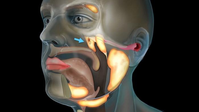 Найден ранее неизвестный орган тела человека (видео)
