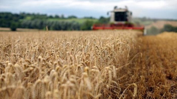 Украина продала агропродукции на $17,6 млрд