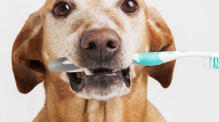 Зачем нужна ультразвуковая чистка зубов домашним животным