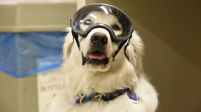 В США собака работает в химической лаборатории (фото)
