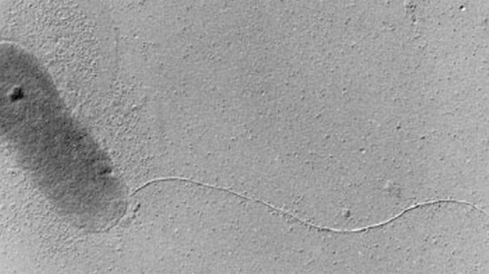 Из пучины в Тихом океане подняли микробов, которых не видит иммунитет человека (фото)