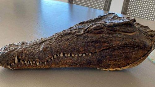 В Новой Зеландии продают голову крокодила, убитого принцем Филиппом
