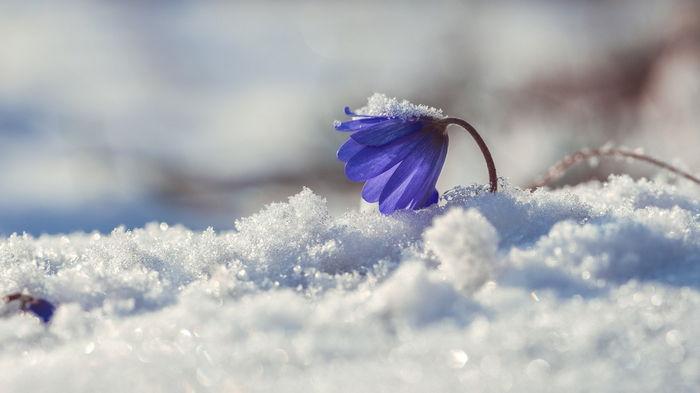 Весна 2021 оказалась самой холодной в Европе за восемь лет