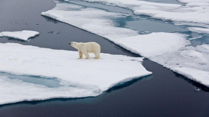 Пять тревожных сценариев, которые ждут Землю, если человечество продолжит бездействовать