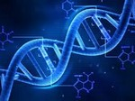 В Китае генетически модифицировали человеческие эмбрионы